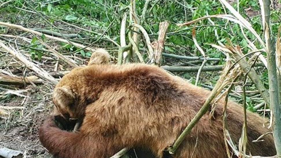 Καστοριά: Αίσιο τέλος για μικρό αρκουδάκι που εγκλωβίστηκε σε συρματόπλεγμα