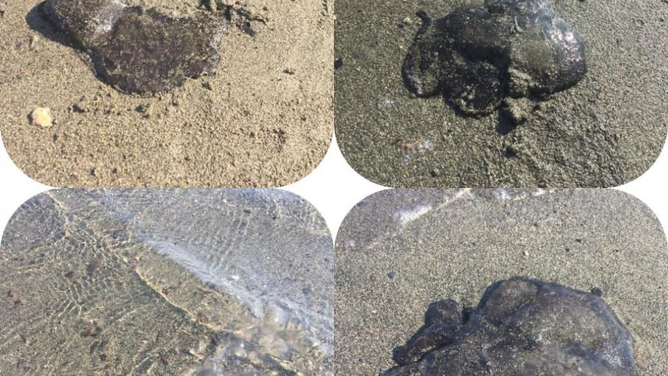 Κύπρος: Έχετε δει τόσο μεγάλες μέδουσες; - Εμφανίστηκαν σε παραλία της Λεμεσού (pics)