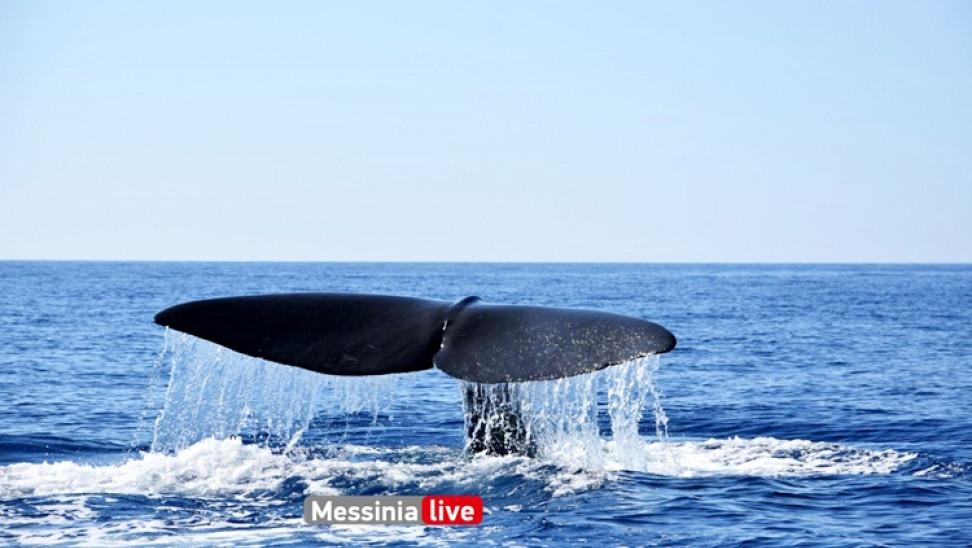 Φάλαινα φυσητήρας 20 μέτρων στη Μάνη!