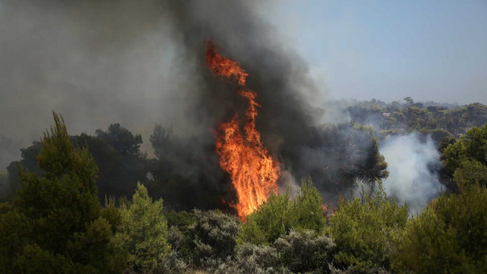 Φωτιά στο Οίτυλο Λακωνίας