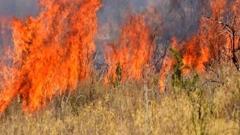 Σοφικό Κορινθίας: Τα αίτια της πυρκαγιάς διερευνά η πυροσβεστική (vid)