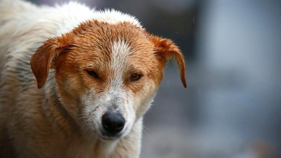 SOS από την ΓΓΠΠ: Προστατέψτε τα ζώα - Έρχονται ακραία καιρικά φαινόμενα