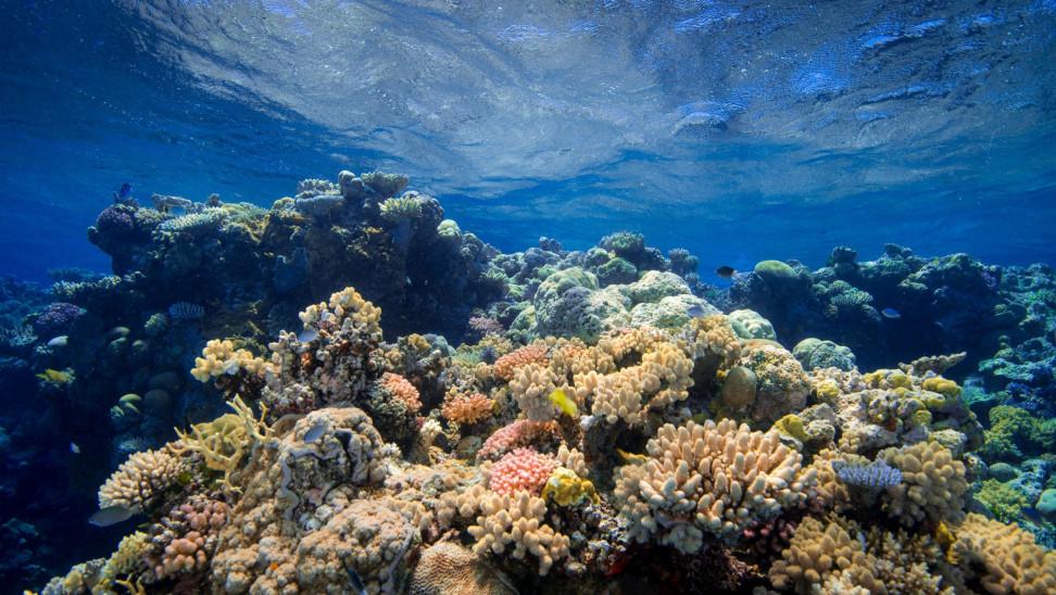 Αυστραλία: Ο Μεγάλος Κοραλλιογενής Ύφαλος της Unesco έχασε τα μισά κοράλλια του σε 25 χρόνια