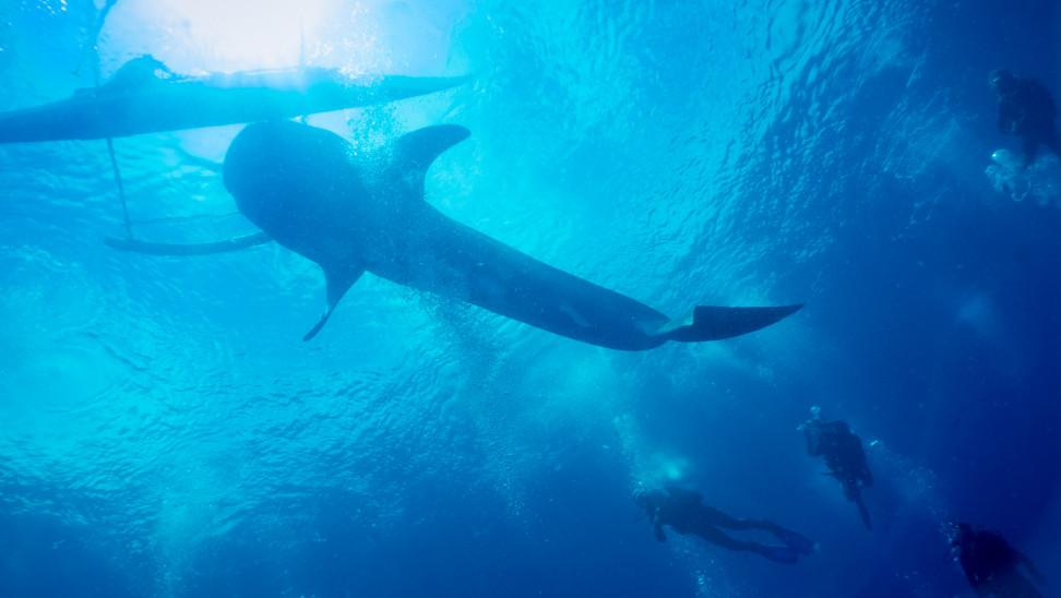 Αίγυπτος: Καρχαρίας 2 μέτρων επιτέθηκε σε 5 άτομα στο καταδυτικό σημείο «Ρας Μοχάμεντ»