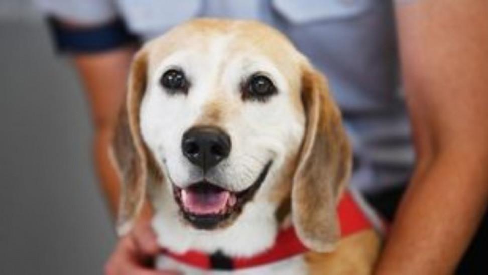 Άμεση μεταφορά της αρμοδιότητας των ζώων συντροφιάς ζητούν με επιστολή στον Μητσοτάκη φιλοζωικοί φορείς
