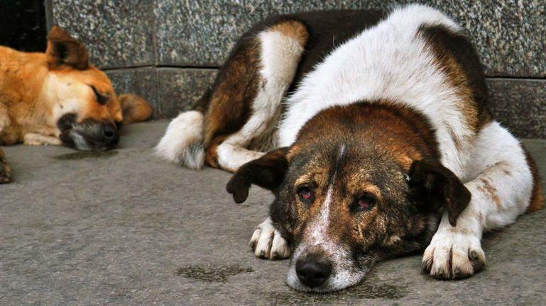 Ηράκλειο: Είχαν στήσει … παράνομο κτηνιατρείο – Χειροπέδες σε επτά άτομα
