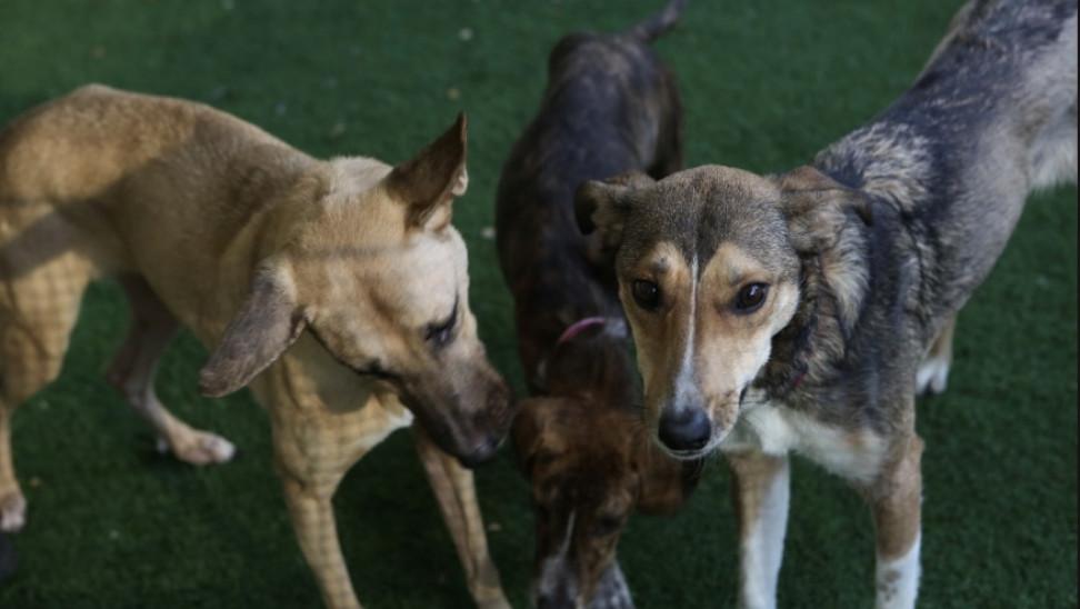 Δημοτικό μητρώο πολιτών-φροντιστών αδέσποτων ζώων από τον Δήμο Ηλιούπολης