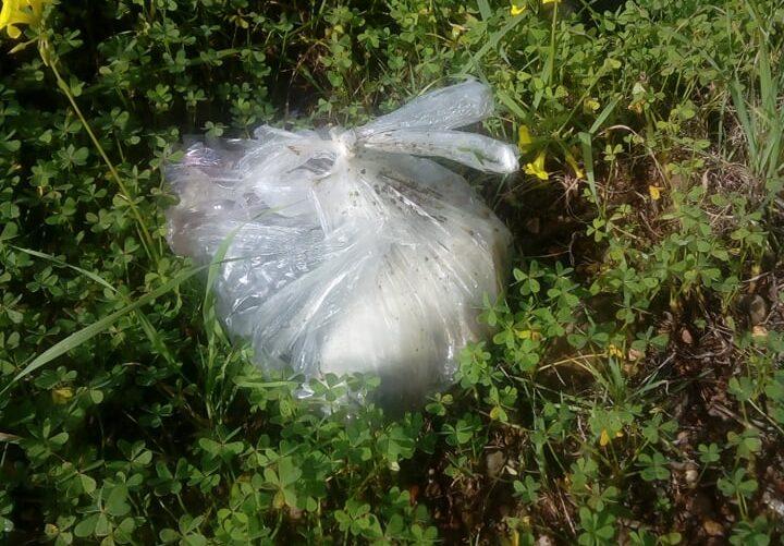 Ηράκλειο: Έκλεισαν σε πλαστική σακούλα νεογέννητα κουτάβια (εικόνες)