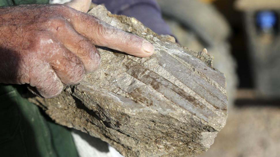 Λέσβος: Τι μαρτυρούν οι κορμοί δέντρων που βρέθηκαν σε νέες ανασκαφές του απολιθωμένου δάσους