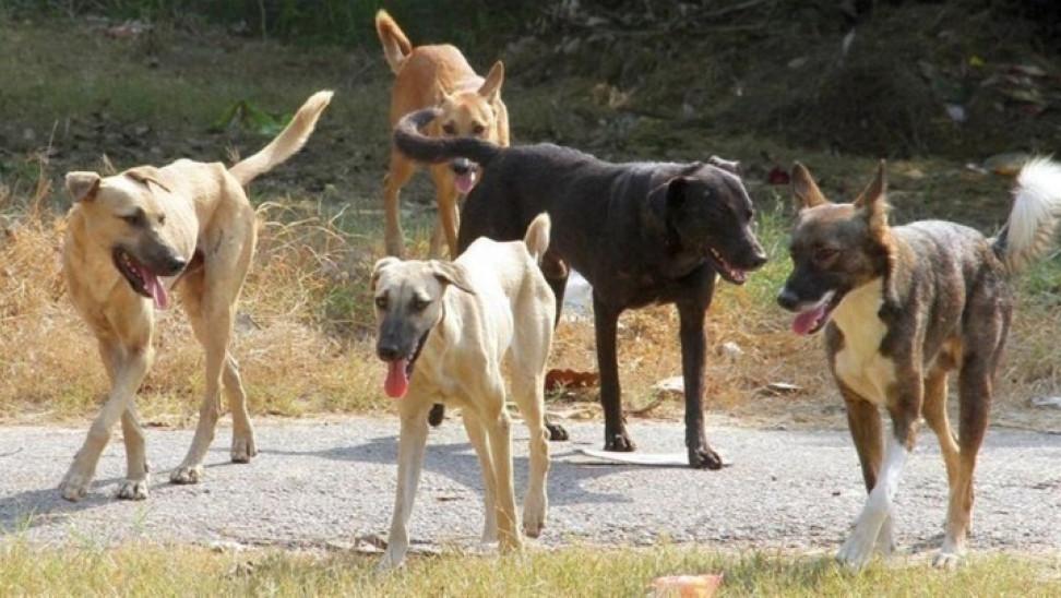 Σαρωτική επικράτηση των μητρώων επί της ευζωίας στο νέο νόμο για τα ζώα συντροφιάς
