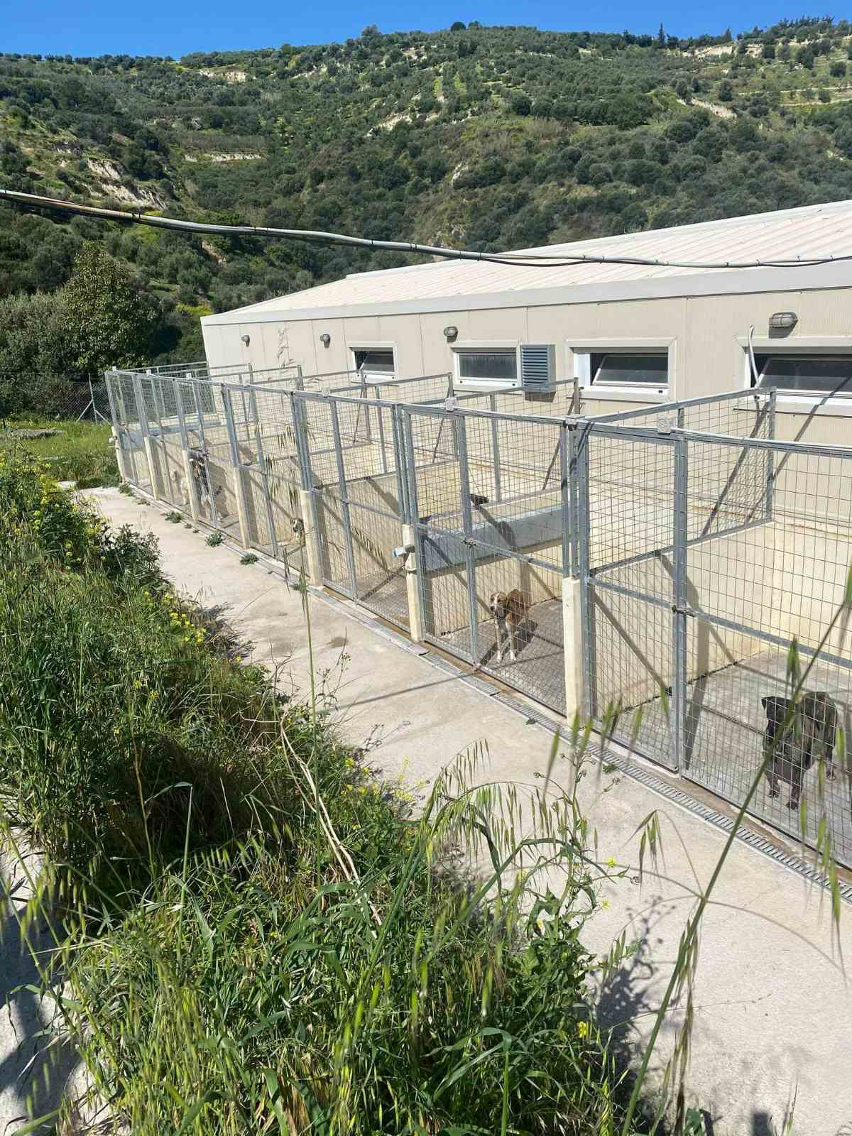 Στο Κυνοκομείο Ηρακλείου βρέθηκε η Αντιδήμαρχος – Τα ζώα θέλουν αγάπη, υπευθυνότητα, και όχι εγκατάλειψη